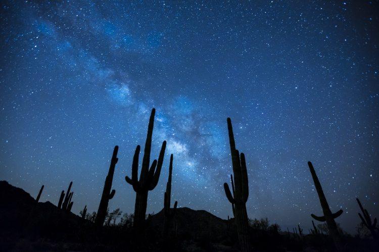 astronomy-cactus-dark-34107.jpg